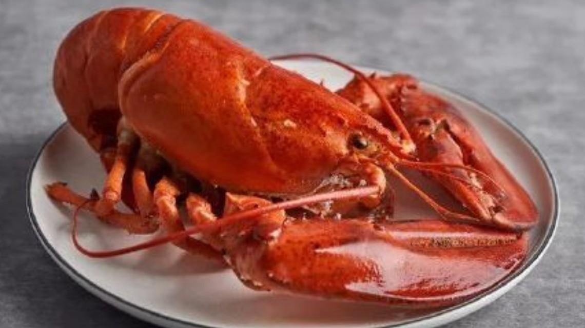 国家重拳出手!英国拟禁止煮食龙虾螃蟹等活物
